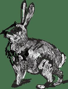 гороскоп 2020 кролик