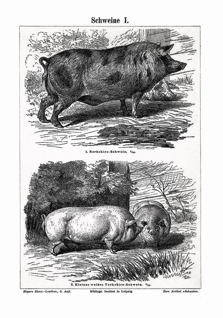 свинья восточный зодиак
