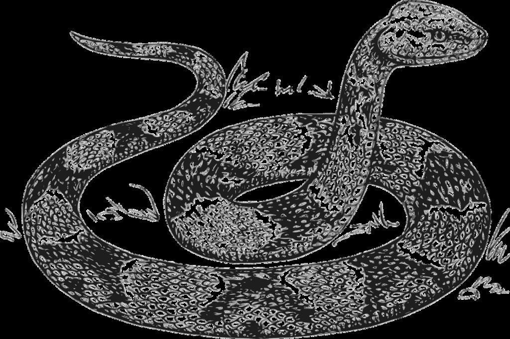 китайский гороскоп змея 2020