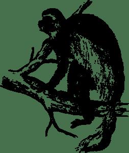 обезьяна 2020 год прогноз
