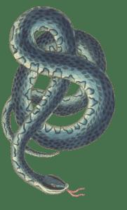 змея 2020