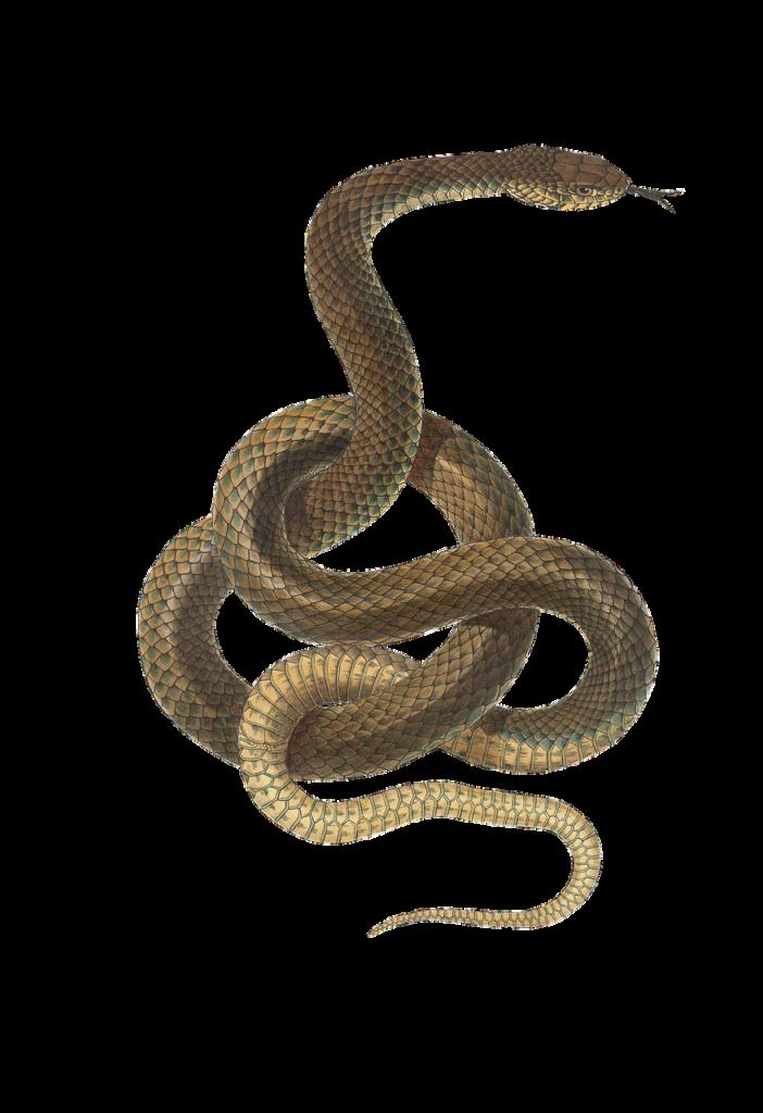 змея гороскоп 2020