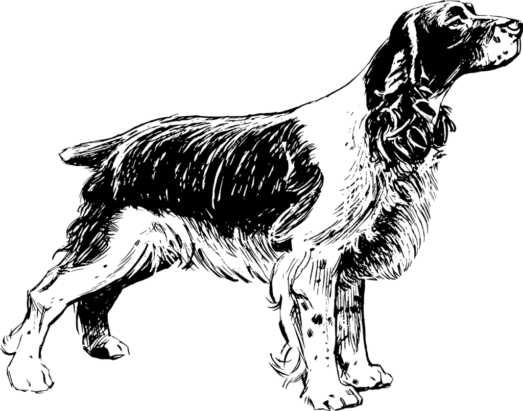 китайский гороскоп 2020 год собака