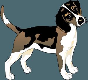 собака гороскоп 2020 год