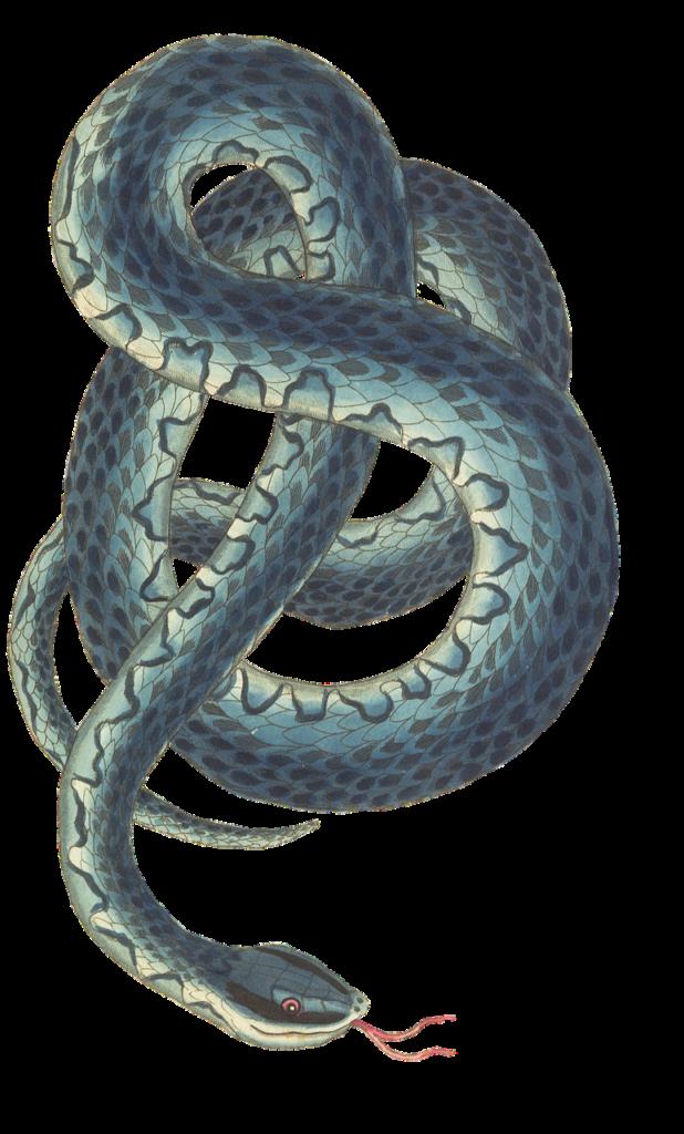 змея кельтский гороскоп
